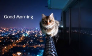 Cat Gud/Good Morning Pic Images Photo Free Download