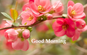 Good morning whatsapp hd wide wallpapers | Good Morning ...
