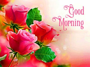 gd mrng images 133 images pictures photo for whatsapp download