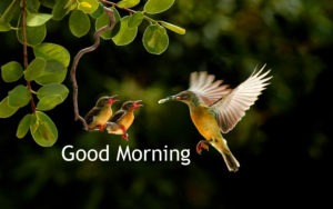 Gud/Good Morning Pic Images Wallpaper For Whatsaap