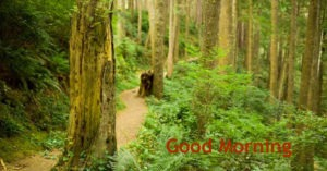 Gud Morning Photo Pictures Pic Download