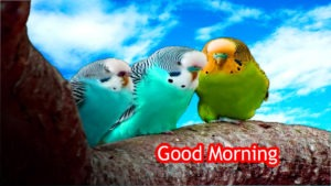 Gud/Good Morning Pic Images for whatsaap download