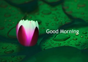 Flower Gud/Good Morning Pic Images Pics Free Download