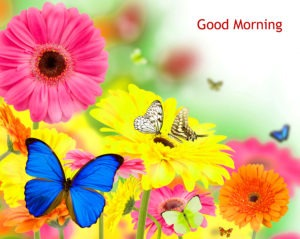 Gud/Good Morning Pic Images Flower HD Download