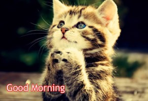 New Gud/Good Morning Pic Images Photo Download