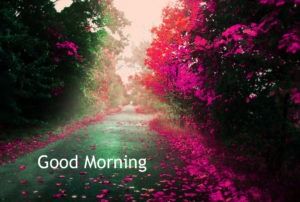 Gud/Good Morning Pic Images Picture Free Download