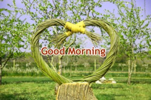Best Gud Morning Images Photo HD Download