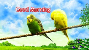 Gud/Good Morning Pic Images Pics Download