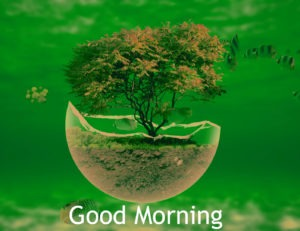 Gud/Good Morning Pic Images pics free download for whatsaap