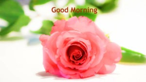 Red Rose Gud Morning Images Photo Download