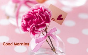 Flower Gud/Good Morning Pic Images for Whatsapp