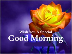 Love Good Morning Images Photo Pictures With Red Rose