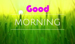 gd mrng images wallpaper Photo Pictures for whatsaap