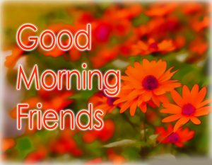 Flower Good Morning Images Wallpaper Pics Download