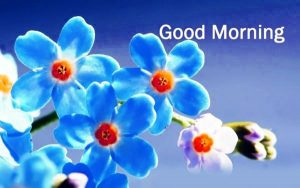Good Morning Wallpaper Photo Pictures Download