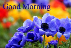 Good Morning Wallpaper Images Photo Picture Download