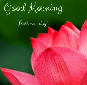 Good Morning Wallpaper Photo Pics Images Free Download