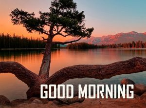 Top Good Morning Images Download