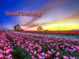 Good Evening Photo Download