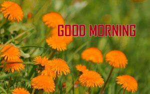 Nature HD Good Morning Pics Download