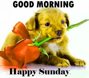 Happy Sunday Good Morning Pics Free