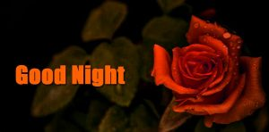 red rose good night pictures With Flower