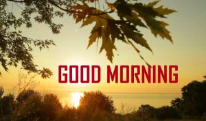 Good Morning Pics Download Photo Free Download