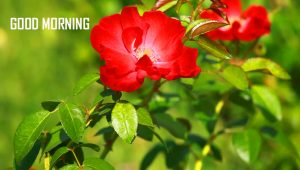Red Nature Good Morning Images