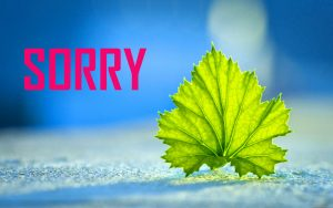 NEW HD SORRY IMAGES FREE DOWNLOAD