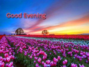 Good Evening Images Pics Downlaod