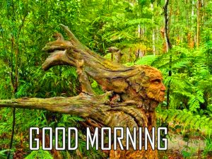Best New Amazing Art Good Morning Photo Images Download