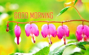 Flower Good Morning Images Pics For Facebook