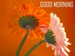 Flower Good Morning Images Wallpaper For Whatsaap