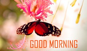 Flower HD Good Morning Pictures With Butterfly
