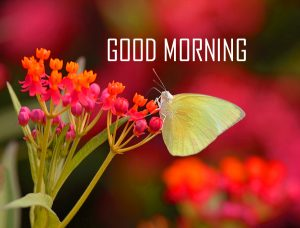 Butterfly Flower Good Morning Images HD Download