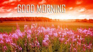 Flower Good Morning Photo