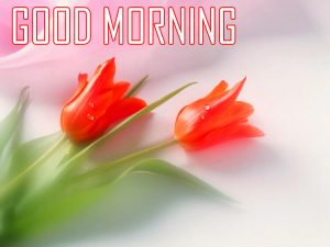 Red Rose Flower Good Morning Images Download