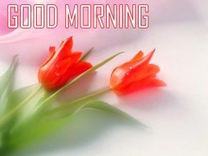 Red Rose Flower Good Morning Images Download