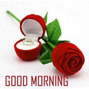 Best Flower Good Morning