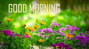 Flower Good Morning Wallpaper Free Download