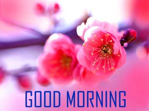 Flower Good Morning Photo Pics pictures HD Download