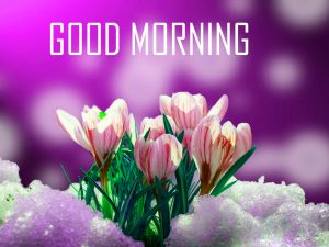 Flower Good Morning images wallpaper
