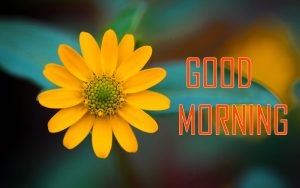 Flower Good Morning images free download