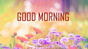 Flower Good Morning hd wallpaper hd download