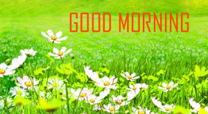 Flower Good Morning Photo Pictures Free Download