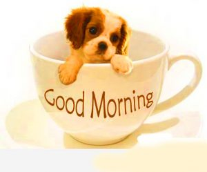 Good Morning Monday Images Photo Pics Download