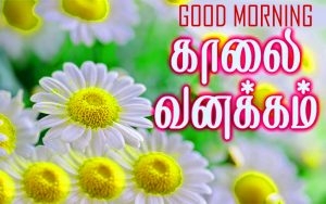 Tamil Quotes Good Morning Images Photo Wallpaper For Whatsaap