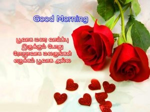 Tamil Quotes Good Morning Images Wallpaper Free Download With Red Rose