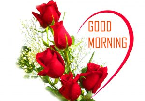 Flower Good Morning Pictures With Red Rose