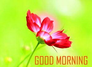 Flower Good Morning Photo Pics Download